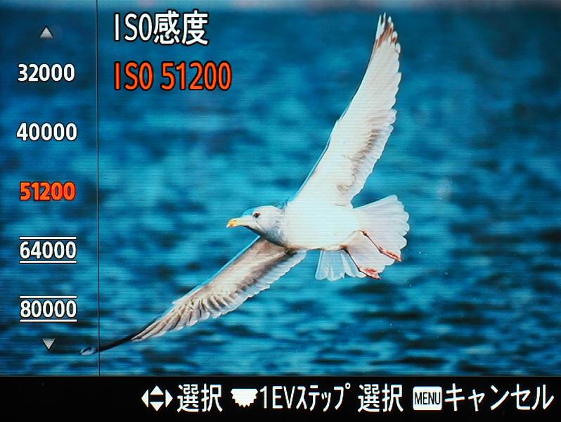 009_o.jpg